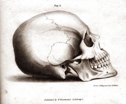 skull_profile