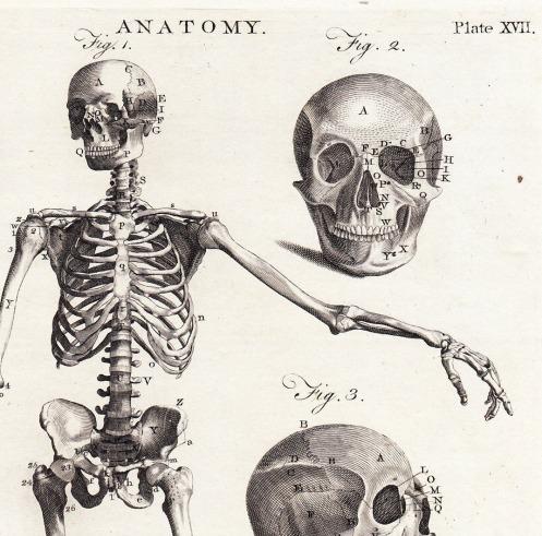 Anatomy_bones