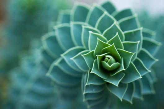 spiral-plants